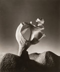 Photographs:Gelatin Silver, Ruth Bernhard (American, 1905-2006). Broken Shell, 1934. Gelatin silver, printed later. 8-5/8 x 7-1/8 inches (21.9 x 18....