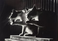 Photographs, Don Hong-Oai (Chinese, 1929-2004). The Cat Photo, 1984. Gelatin silver. 8 x 10 inches (20.3 x 25.4 cm). Signed in ink wi...