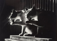 Don Hong-Oai (Chinese, 1929-2004) The Cat Photo, 1984 Gelatin silver 8 x 10 inches (20.3 x 25.4 c
