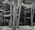 Photographs, Brett Weston (American, 1911-1993). Beech Forest, Holland, 1971. Gelatin silver. 10-1/2 x 12-3/8 inches (26.7 x 31.4 cm)...