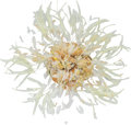 """Luxury Accessories:Accessories, Chanel Runway Feather Camellia Brooch. Condition: 1. 4"""" Width. ..."""