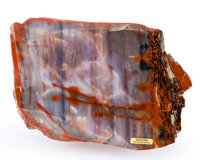 Petrified Conifer Piece Araucarioxylon Triassic Chinle Formation Arizona, USA 8.07 x 5.91 x 2.74 in