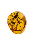 Amber, Amber with Inclusions. Hymenaea protera. Oligocene. Dominican Republic. 0.44 x 0.35 x 0.22 inches (1.12 x 0.90...