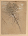Works on Paper, Samuel Colman (American, 1832-1920). Maple Tree, Keene Valley, August 1878. Ink, watercolor, and pencil on paper. 10 x 7...