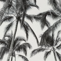 Photographs, David Lam (Chinese, 20th Century). Coconut Trees #3, 2004. Gelatin silver. 10-1/2 x 10-1/2 inches (26.7 x 26.7 cm). Sign...