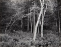 Photographs, George A. Tice (American, b. 1938). Woods, Port Clyde, Maine, 1970. Gelatin silver. 7-1/2 x 9-1/2 inches (19.1 x 24.1 cm...