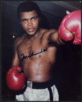 Boxing Collectibles:Autographs, Muhammad Ali Signed Photograph....