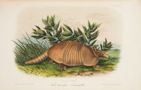 John James Audubon and John Bachman. The Quadrupeds of North America. New York: V. G. Audubon, 1849-1854. First octa...