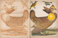 Alexander Wilson. American Ornithology. Or, the Natural History of the Birds of the United S... (Total: 9)