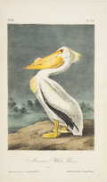 Books:Natural History Books & Prints, John James Audubon. The Birds of America. From Drawings Made in the United States and Their Territories. New Yor... (Total: 7 Items)
