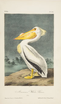 John James Audubon. The Birds of America. From Drawings Made in the United States and Their Territories. New Yor... (Tot...