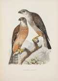 Books:Natural History Books & Prints, Charles B. Cory. The Birds of Haiti and San Domingo. Boston: 1885. First edition....
