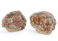 Dinosaur Coprolite Sliced Pair Jurassic Morrison Formation Utah, USA 5.45 x 5.19 x 1.83 inches (13.84 x 13... (Total: 2...