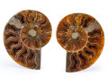 Fossils:Cepholopoda, Sliced Ammonite Pair. Cleoniceras sp.. Cretaceous. Madagascar. 3.56 x 2.93 x 0.51 inches (9.05 x 7.43 x 1.30 c... (Total: 2 Items)