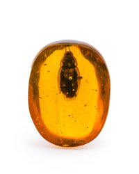 Amber with Inclusions Hymenaea protera Oligocene Dominican Republic 1.03 x 0.80 x 0.45 inches (2.61 x 2.02