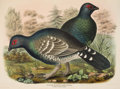 Books:Natural History Books & Prints, Daniel Giraud Elliot. A Monograph of the Tetraoninae. Or Family of the Grouse.