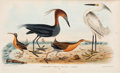 """Books:Natural History Books & Prints, Alexander Wilson and Charles Lucien Bonaparte. American Ornithology. London: 1832. The """"Jardine edition.""""... (Total: 3 Items)"""