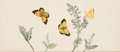 Books:Original Art, Fanny Maitland. [Album of sixteen original watercolors of insects or plants]. [Place of production not identified: circa 185...