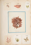 Books:Natural History Books & Prints, George Ferson Durant. Algae and Corallines, of the Bay & Harbor of New York. Illustrated With Natural Types. New...