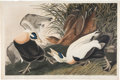 Books:Natural History Books & Prints, J[ohn]. J[ames]. Audubon. Eider Duck. Fuligula Mollissima. London: R. Havell, 1835. Original hand-colored engrav...
