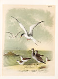 Books:Natural History Books & Prints, Jacob H. Studer and Theodore Jasper. Studer's Popular Ornithology. Columbus, OH: 1878. First edition.... (Total: 2 Items)