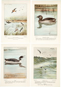Books:Natural History Books & Prints, [Frank M.] Chapman. [Colored Plates to Accompany Teachers' Manual of Bird-Life]. [New York: 1899]. Early edition...