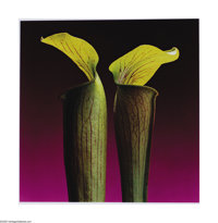 ROBERT MAPPLETHORPE (1946-1989) Jack In The Pulpits, 1988 Dye transfer print 22.25in. x 22in. (image size) Signed on