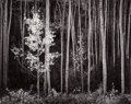 Photographs, Ansel Adams (American, 1902-1984). Aspens, Northern New Mexico, 1958. Gelatin silver, printed between 1963 and 1973. 15-...