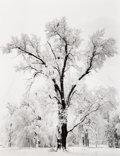 Photographs, Ansel Adams (American, 1902-1984). Oaktree, Snowstorm, Yosemite National Park, California, 1948. Gelatin silver, printed...