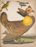 Books:Natural History Books & Prints, Alexander Wilson. American Ornithology. Or, the Natural History of the Birds of the United States. Philadelphia:... (Total: 9 Items)