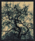 Photographs, Mike and Doug Starn (American, b. 1961). Blot Out the Sun #2, 1996-2000. Digital pigment print on Thai mulberry and tiss...