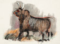 Works on Paper, Otis Dozier (American, 1904-1987). Horned Bull, 1966. Ink and watercolor on paper. 8 x 10-1/2 inches (20.3 x 26.7 cm) (s...