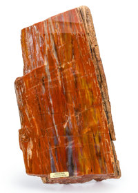 Petrified Conifer Piece Araucarioxylon arizonicum Triassic Chinle Formation Arizona, USA 9.65 x 4.92