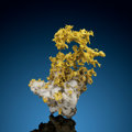 Minerals:Golds, Crystallized Gold on Quartz. Red Bank Mine. Bagby, Bagby-Mariposa-Mount Bullion-Whitlock District. Mother Lode Bel...