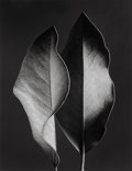 Photographs, Ruth Bernhard (American, 1905-2006). Two Leaves, 1952. Gelatin silver, printed later. 13-1/2 x 10-1/2 inches (34.3 x 26....