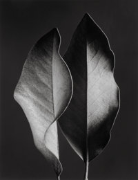 Ruth Bernhard (American, 1905-2006) Two Leaves, 1952 Gelatin silver, printed later 13-1/2 x 10-1/