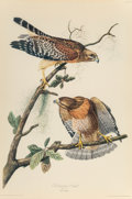 Prints & Multiples, After John James Audubon (American, 1785-1851). Red-shouldered Hawk. Lithograph on colors on paper lai...