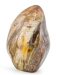 Lapidary Art:Carvings, Petrified Wood Free-Form. Madagascar. 4.95 x 3.26 x 2.42 inches (12.57 x 8.28 x 6.15 cm). ...