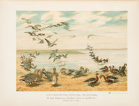 Sergius Alphéraky. The Geese of Europe and Asia. Being the description of most of the old world species. London:...