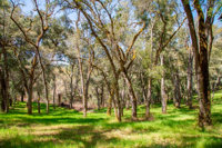 35+ Acres in Carmel, CA with Sublime Views