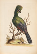 Books:Natural History Books & Prints, George Edwards. A Natural History of Uncommon Birds, and of Some Other Rare and Undescribed Animals. London: Pri... (Total: 2 )