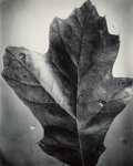 Photographs, Berenice Abbott (American, 1898-1991). Leaf, Supersight; Apple, Supersight; Untitled (Spindly Tree Branch) (3 works), 19... (Total: 3 )