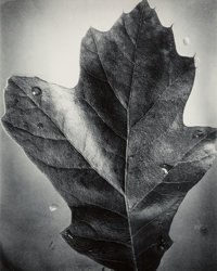 Berenice Abbott (American, 1898-1991) Leaf, Supersight; Apple, Supersight; Untitled (Spindly Tree Branch) (3 works), 19...