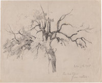 Julian Onderdonk (American, 1882-1922) Live Oak Trees- from Nature, 1915 Pencil on paper 8 x 10 i