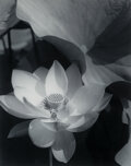 Photographs, Edward Steichen (American, 1879-1973). Lotus, Mount Kisco, New York, 1915. Gelatin silver, printed 1981-1982 by George T...