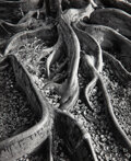 Photographs, Ansel Adams (American, 1902-1984). Roots, Foster Garden, Honolulu, Hawaii, 1948. Gelatin silver. 7-1/2 x 6-1/4 inches (1...