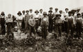 Photographs, Lewis Wickes Hine (American, 1874-1940). Child Labor: Tobacco Workers, Connecticut, 1916. Gelatin silver. 4-5/8 x 6-1/2 ...