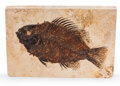 Fossils:Fish, Fossil Fish. Priscacara sp.. Eocene. Green River Formation. Wyoming, USA. 5.15 x 3.48 x 0.53 inches (13.07...