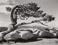 Photographs, Ansel Adams (American, 1902-1984). Jeffrey Pine, Sentinel Dome, 1940. Gelatin silver, printed later. 7 x 9 inches (17.8 ...