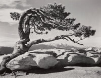 Ansel Adams (American, 1902-1984) Jeffrey Pine, Sentinel Dome, 1940 Gelatin silver, printed later 7 x 9 inches (17.8